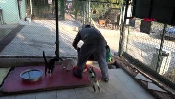 Adana da Modern Hayvan Barınağı