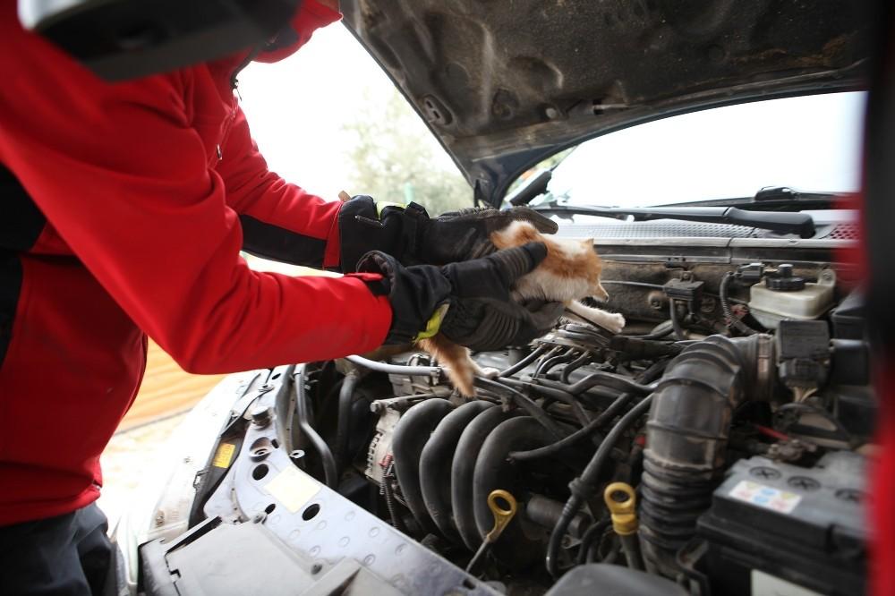 Araç motoruna giren inatçı yavru kedi itfaiye ekiplerince kurtarıldı