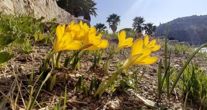 Aydın Güvercinada'nın Çiçekleri Koruma Altına Alındı