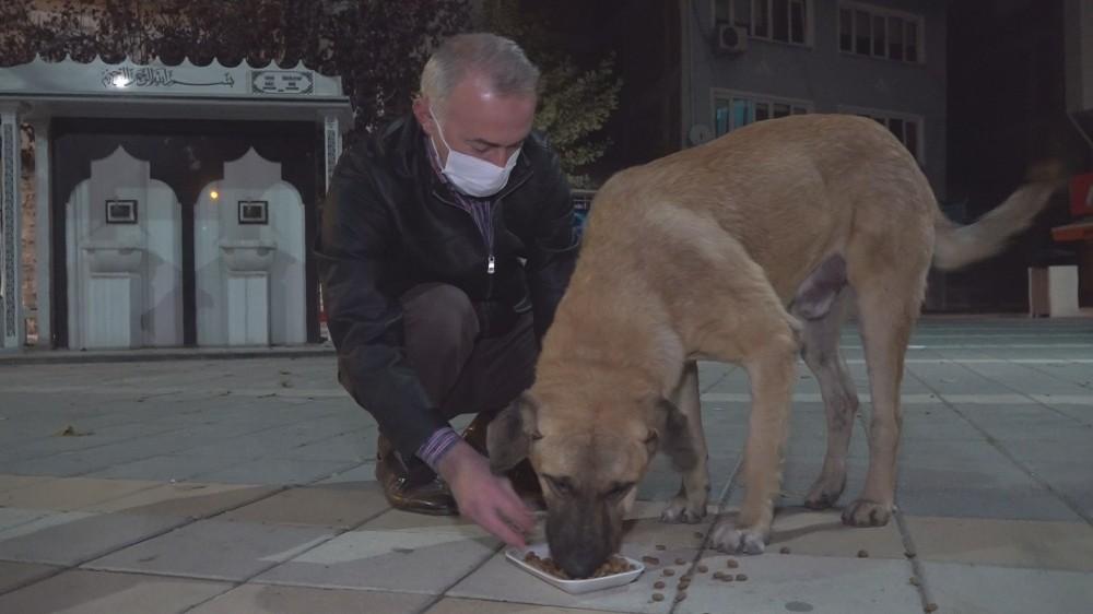 Aç Kalan Köpekleri Elleriyle Besledi