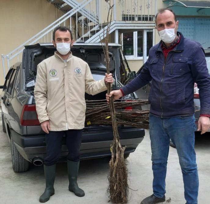 Samsun Büyükşehir'den 2 Bin Ceviz Fidanı Desteği