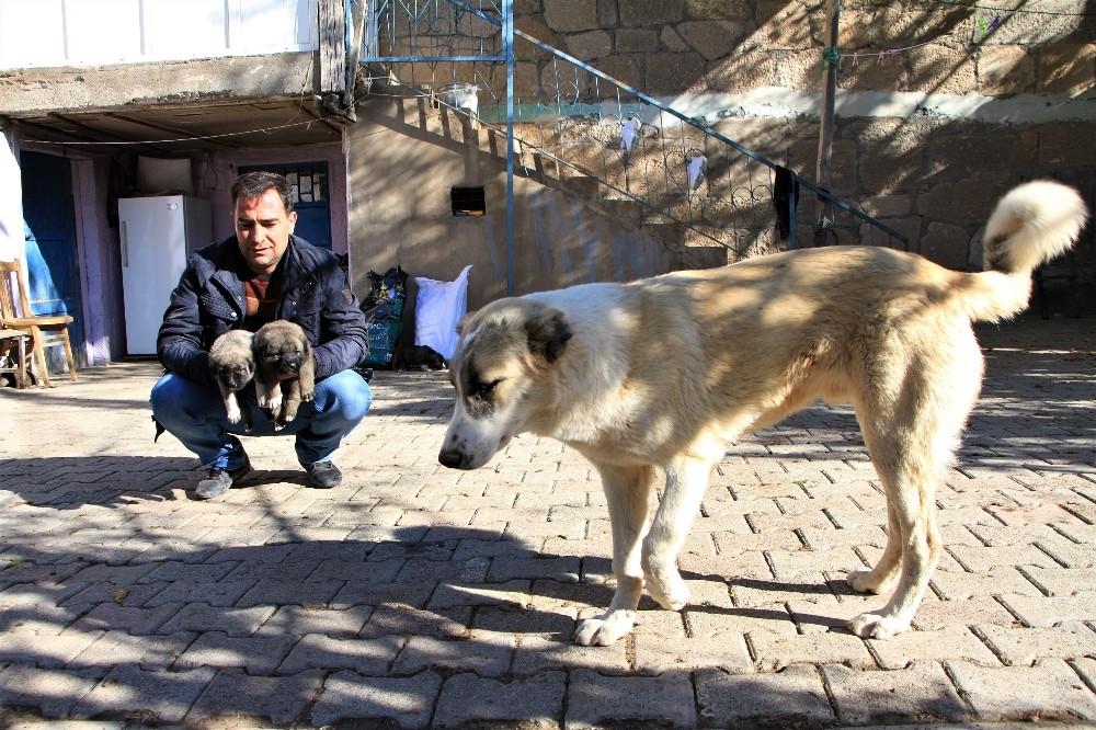 Kış geldi 850 hanelik köy 50'ye düştü, sokak hayvanları muhtara kaldı