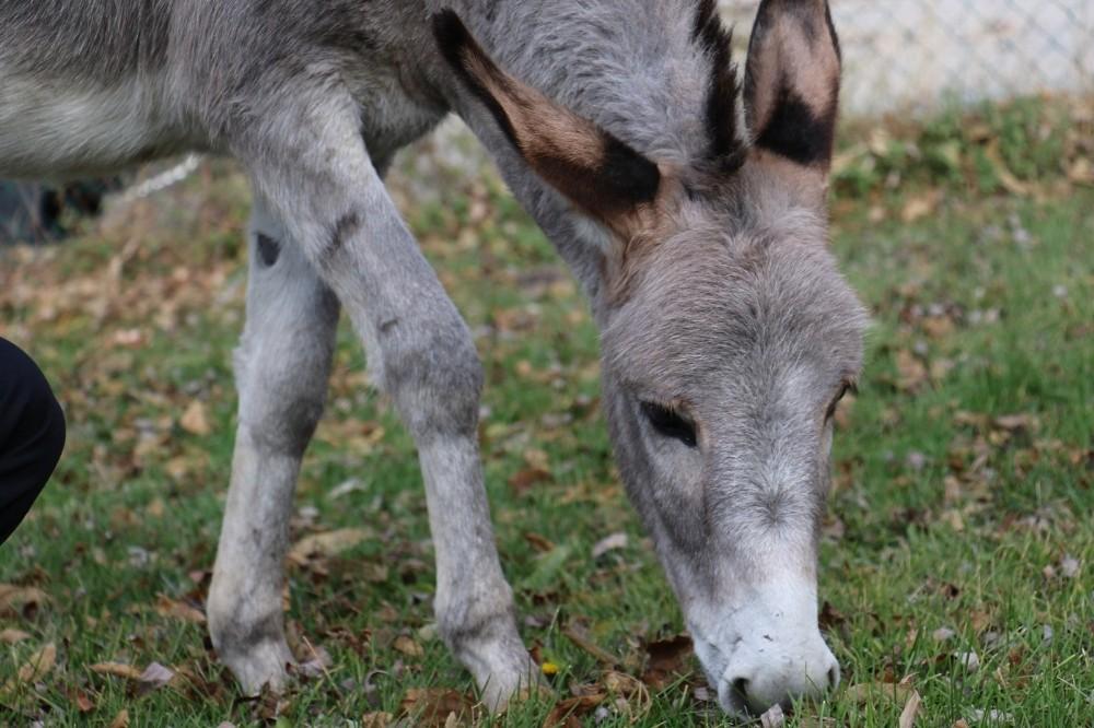 Pekmez'in Hayvan Barınağında En Yakın Arkadaşları Köpekler