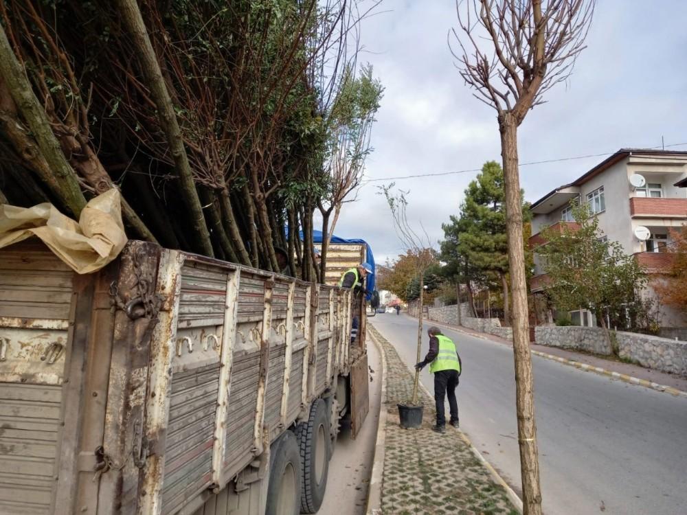 Safranbolu'da 153 Akasya Fidanı Toprakla Buluşturuldu.