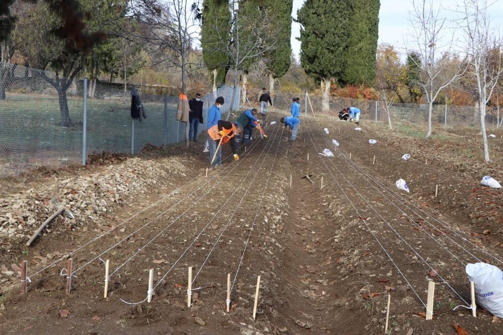 10 bin adet lale soğanı toprakla buluştu