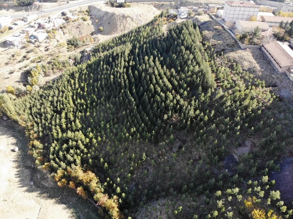 10 bin fidan dikip çöplük alanı ormanlık alana çevirdi