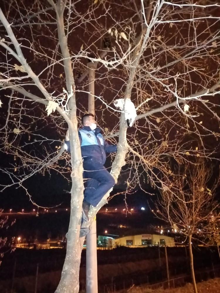 Ağaçta mahsur kalan kediyi zabıta kurtardı