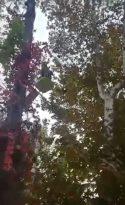 Ağaçta mahsur kalan papağanı itfaiye kurtardı