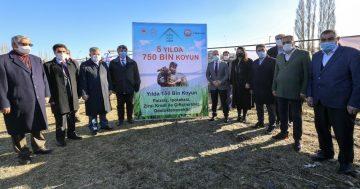 Ağrı'da '5 Yılda 750 bin Koyun Projesi' kapsamında çiftçiler ilk koyunlarını teslim almaya başladı