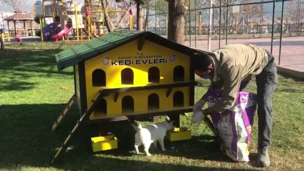 Amasya Belediyesi ekipleri sokak hayvanlarını unutmadı