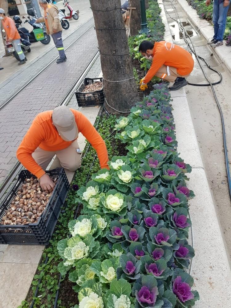 Antalya caddelerine 161 bin adet lale, sümbül, çiğdem soğanı