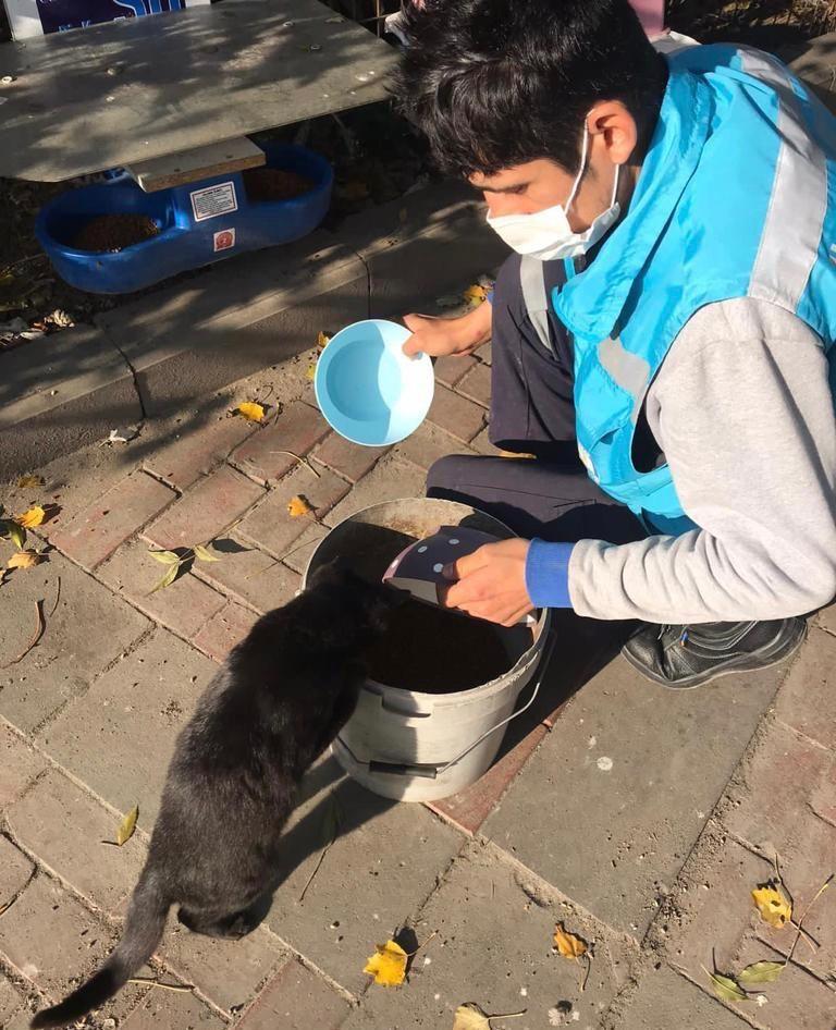 Avcılar'da kısıtlamada sokak hayvanları unutulmadı