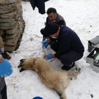 Hakkari Başıboş Sokak Hayvanları Uzman Ellere Emanet