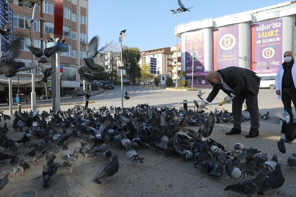 Başkan sokak hayvanlarını eliyle besledi