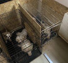 Keçiören'de Bir Binanın Bodrum Katında 68 Köpek Bulundu