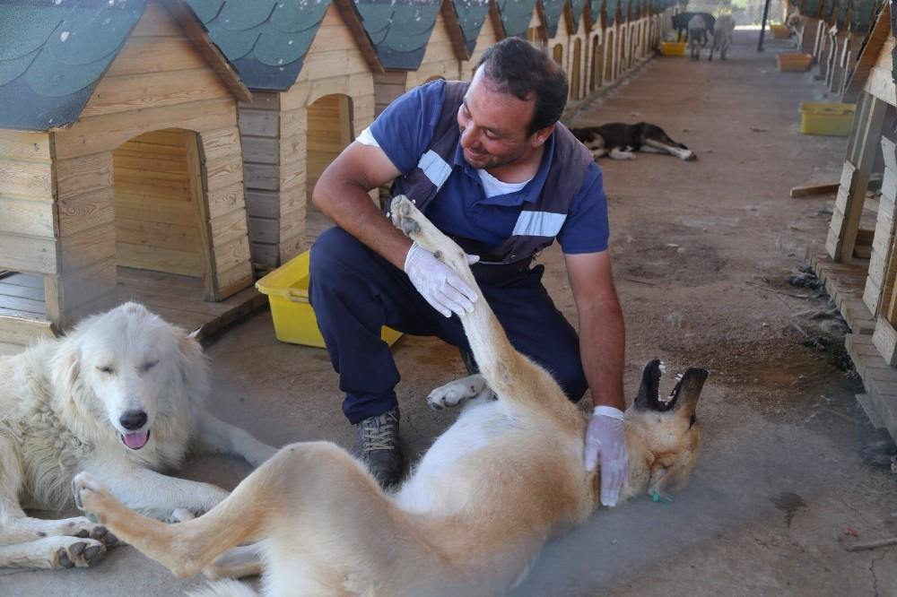 Bingöl'de 110 sokak hayvanı sahiplendirildi