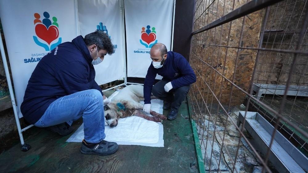 Boynundan vurulan köpeğin imdadına Başakşehir Belediyesi ekipleri yetişti