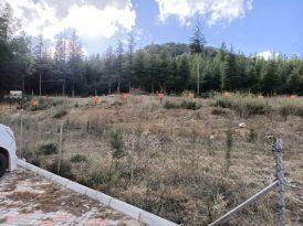 Bucak'ta Anne ve Çocuklarına Özel Hatıra Ormanı Oluşturuldu