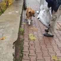 Bucak'ta sokağa çıkma kısıtlamasında sahipsiz kalan sokak hayvanları için her noktaya mama bırakıldı