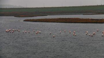 Büyükçekmece'de flamingolar masalsı görüntüler oluşturdu