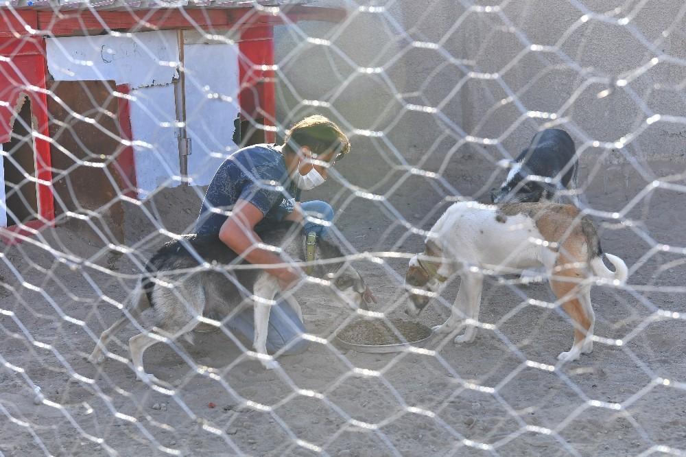 Büyükşehir'den sokak hayvanları gönüllülerine destek