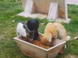 Çameli Belediyesi sokak hayvanlarına özel ilgi gösteriyor