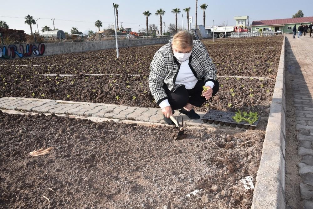 Ceyhan Belediyesi sebze yetiştirip dağıtacak