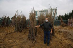 Çiftçiler yüzde 50 hibeli fidanları almaya başladı