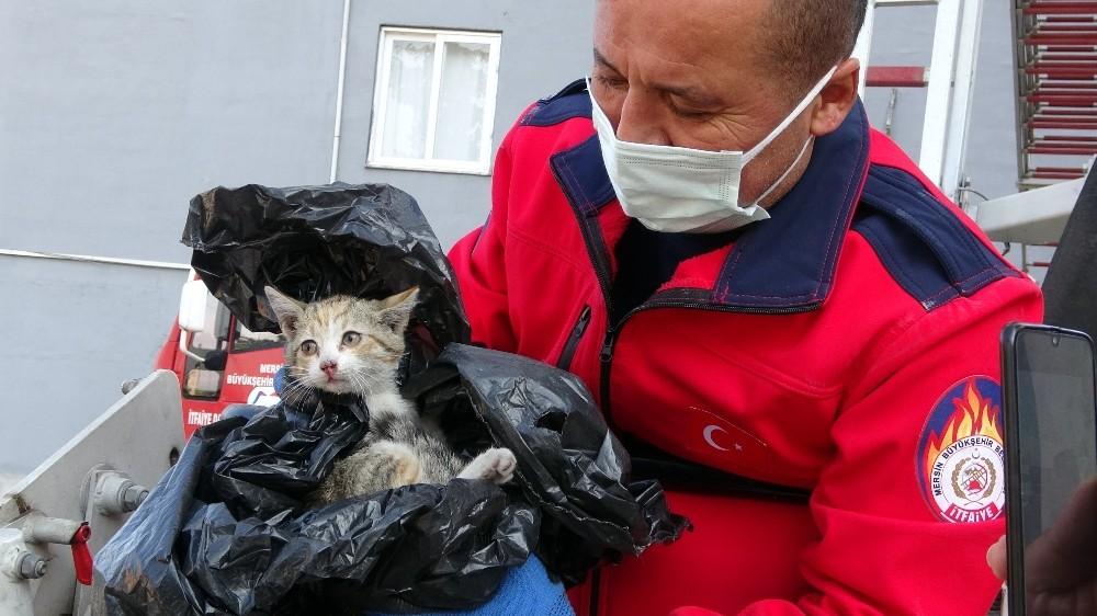 Dokuzuncu katta yavru kedi operasyonu