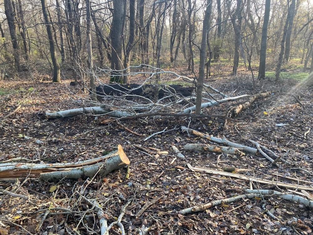 Edirne'de ağaç kesimine çevrecilerden tepki