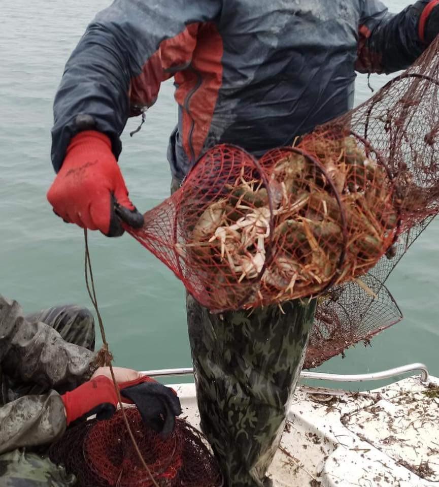 Eğirdir Gölü'nde 730 adet kerevit pinterine el konuldu
