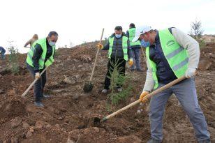 Erciş Belediyesi orman çalışmalarını sürdürüyor