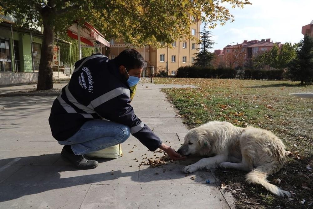 Erzincan'da sokak hayvanlarına yem bırakıldı