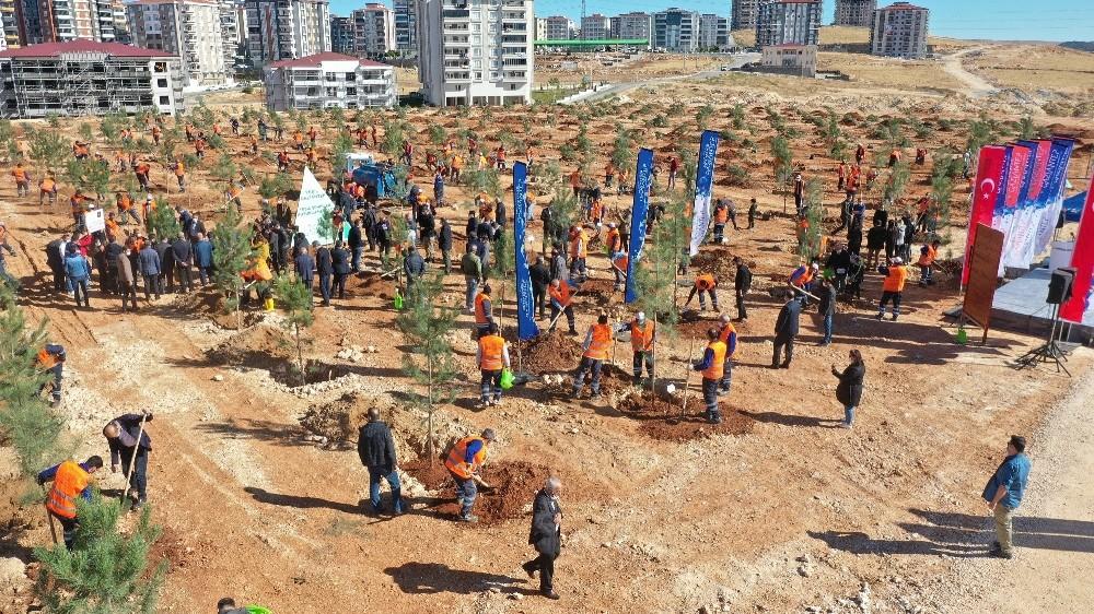 Gaziantep kent merkezinde 3 bin 83 büyük ağaç toprakla buluştu