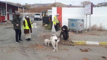 Gönüllü öğretmenler sokak hayvanlarına mama bıraktı