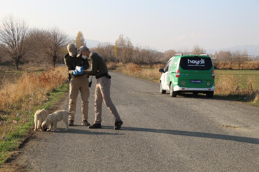 Hayvanları koruma polisi kısıtlamada sokak hayvanları için görevde