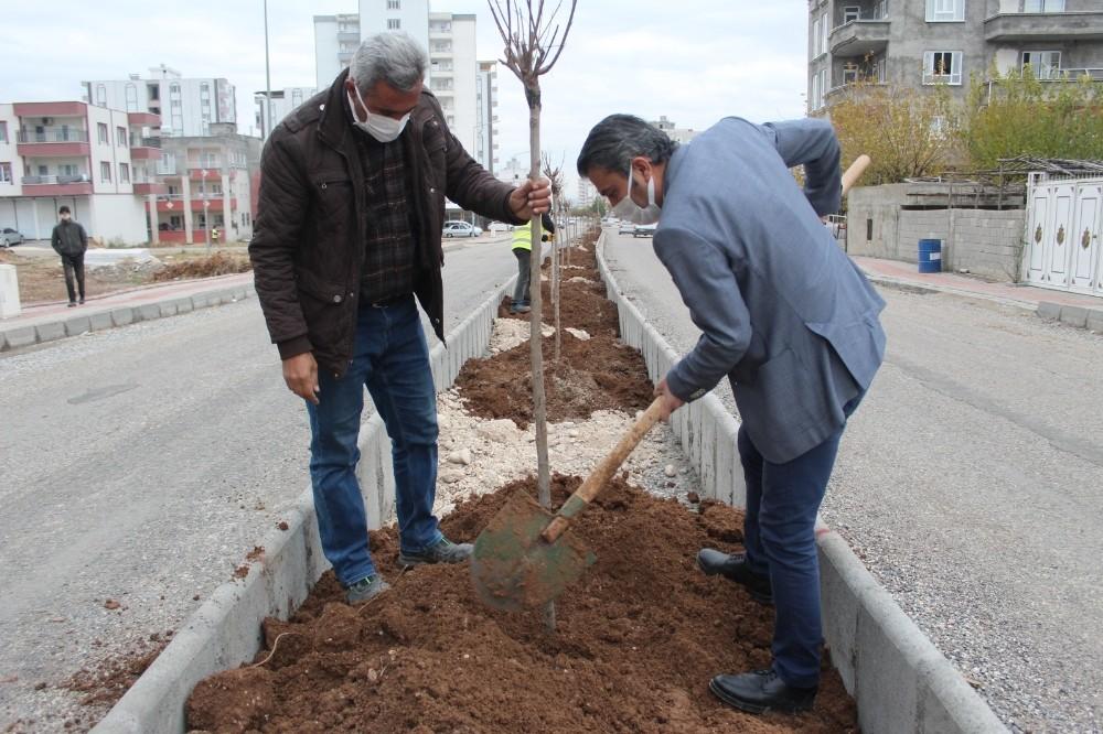 Kahta'da yeşillendirme çalışmaları devam ediyor