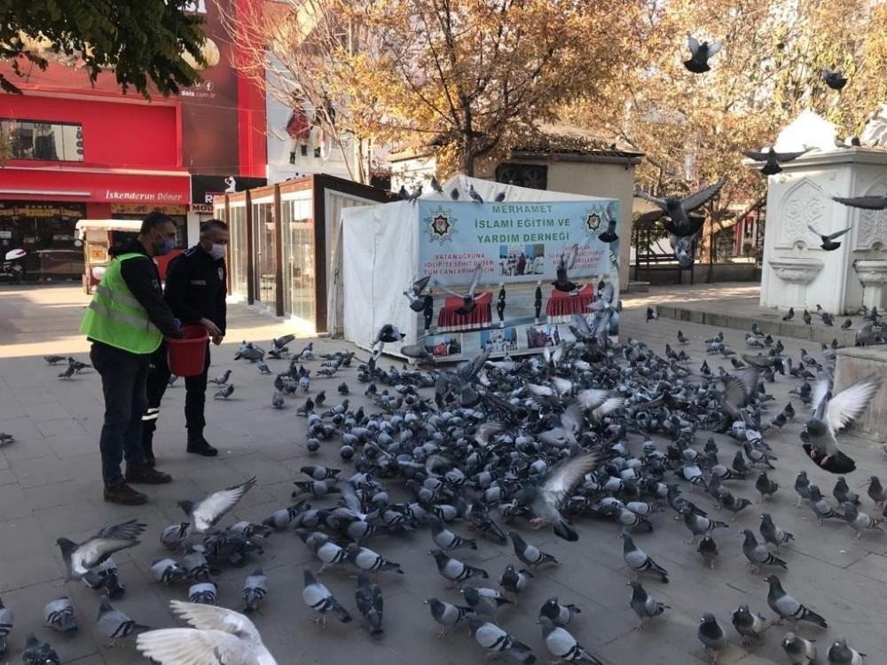 Kırıkkale'de sokak hayvanlarına şefkat eli