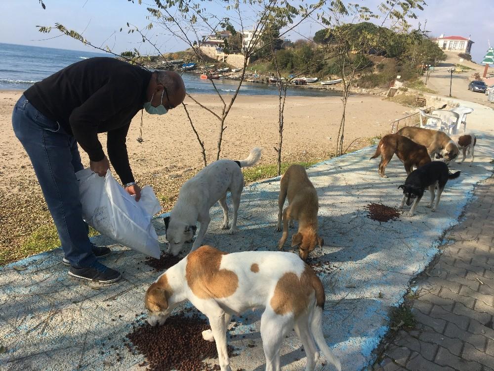 Kısıtlamada yiyecek bulamayan hayvanlar için seferber olundu