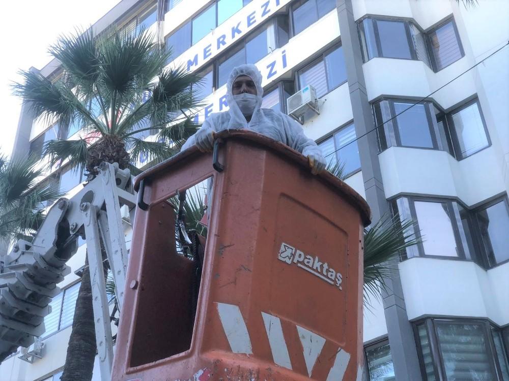 Konak'ta palmiyelere enjeksiyonlu koruma