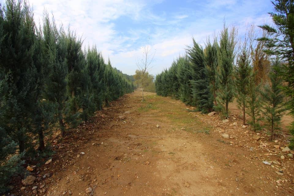 Korona virüsünden hayatı kaybedenler için 75 bin ağaç dikilecek