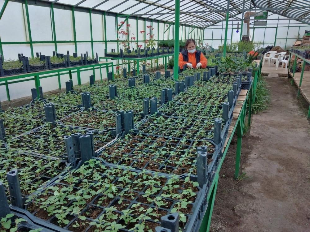 Marmaris'in çiçek seraları 1,5 milyon TL tasarruf sağlıyor