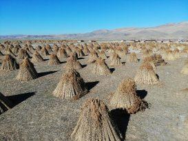 Afyon'da 200 Nüfuslu Köy 5 Ayda 1 Milyon Dolarlık İhracat Yapıyor
