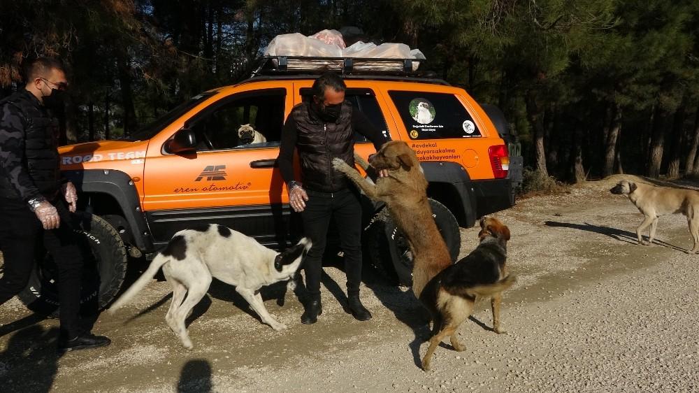 Bursa Sokağa Çıkma Kısıtlamasında Dağlarda Aç Kalan Hayvanları Besledi
