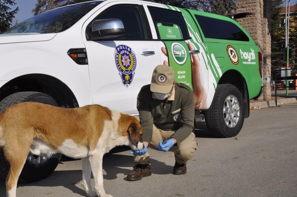 Polis ve hayvanseverler sokak hayvanları için sokaklarda