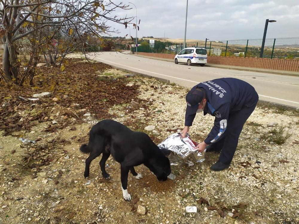 Şahinbey'de sokak hayvanları için yem ve mama bırakılıyor