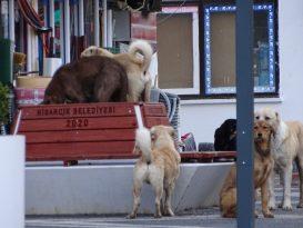 Sessiz sokaklarda köpek egemenliği