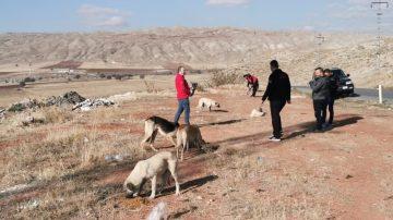 Sivas'ta Sokak Hayvanları Unutulmadı