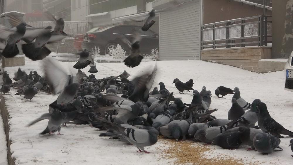Soğuk havada aç kalan kuşlara esnaf sahip çıktı