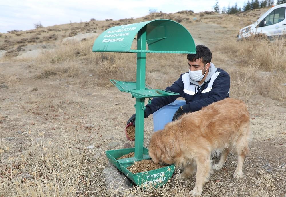 Talas'ta sokak hayvanlarına yardım eli